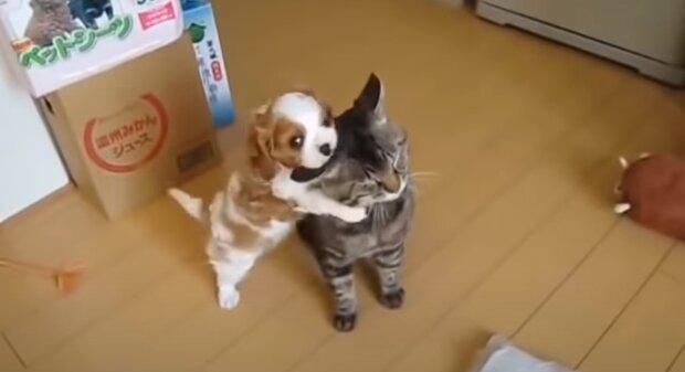 Котик, скріншот: Youtube