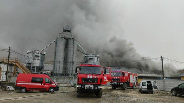 """На Франківщині пекельний вогонь мало не перетворив свиней на шашлики: """"Ферма палає!"""""""