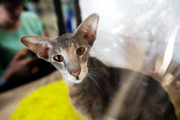 кошка, фото: EAOMedia