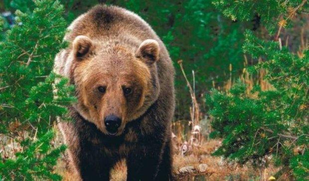Ведмедя вдалося прогнати однією-єдиною фразою