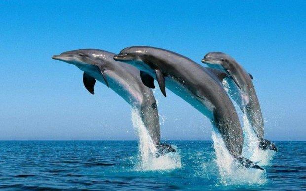 Незабаром буде розшифровано мову дельфінів