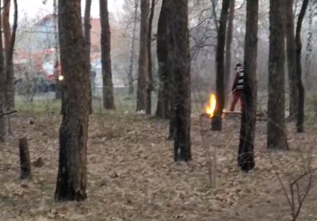 вогнище у лісі, скріншот з відео