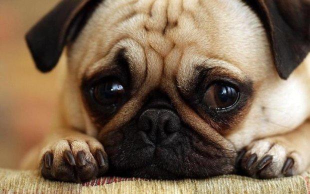 Для собак придумали людське заняття