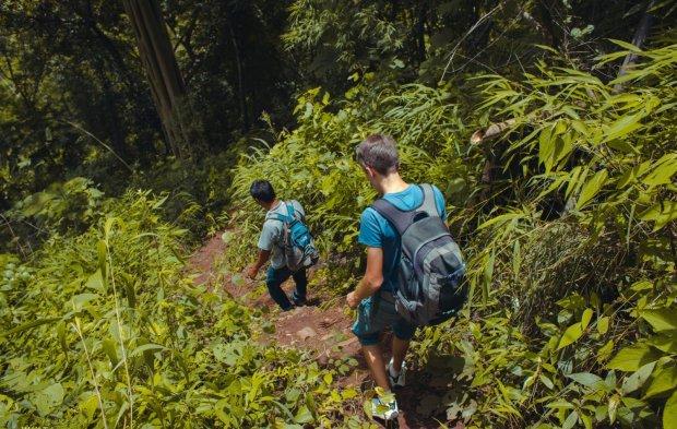 Горная звезда с голубой шеей: ученые нашли в джунглях уникальную птицу