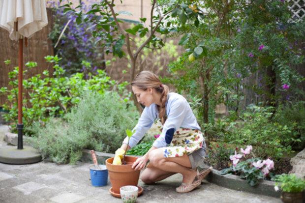 Пересаджування рослин, фото gettyimages