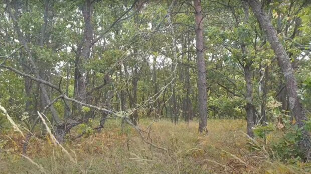 лес, скриншот из видео