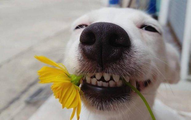 Собака-улыбака покорила сеть