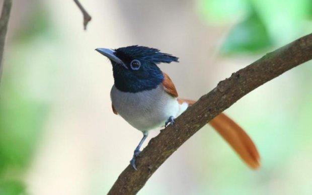 Райський сад: як життя поблизу птахів впливає на організм людини
