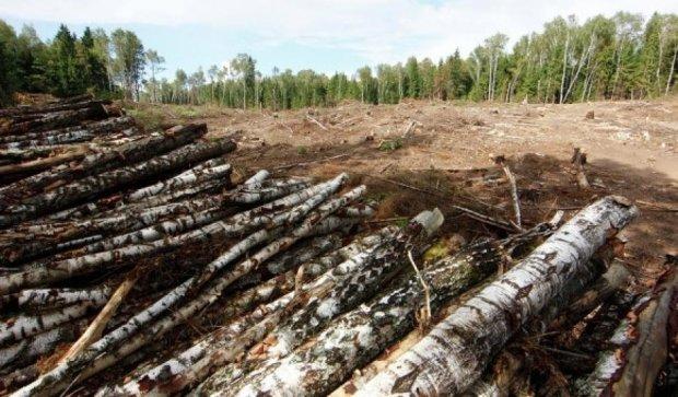 Остап Еднак не оставляет попыток подчинить себе леса Украины