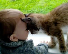 Кішка замінила малюку матір, фото Getty Images