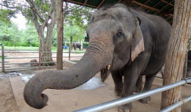 Слониха в зоопарку вбила каменем семирічну дитину