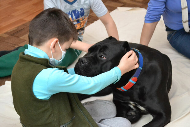 Спасенный пес, фото из свободных источников