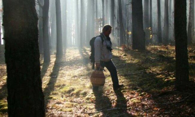 У горах на Закарпатті зник розгублений одесит з кошиком, рятувальники обчісують кожен метр