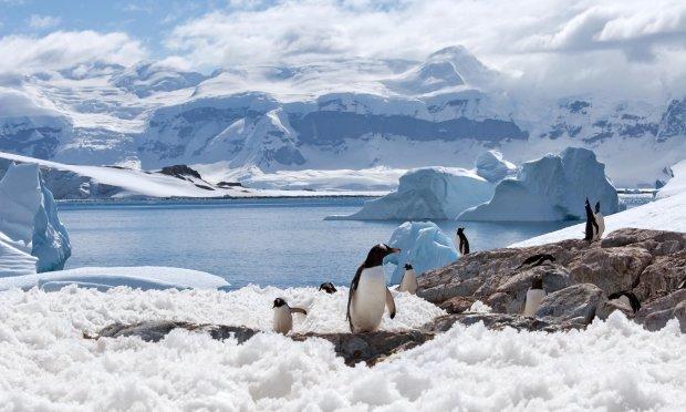 Льоди Антарктиди вкрилися тріщинами: катастрофи не уникнути