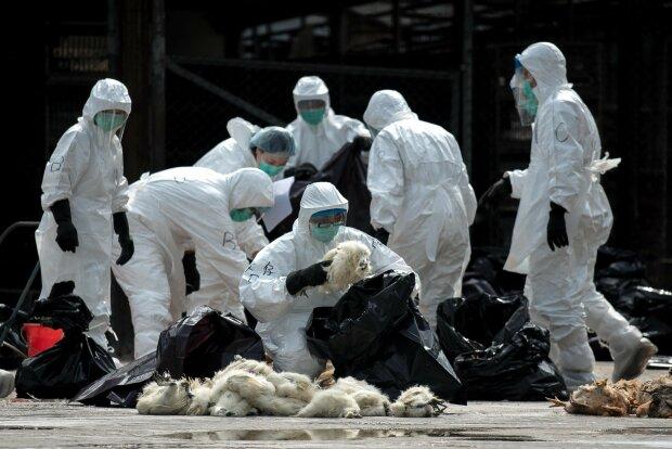 """Вместо """"желтых жилетов"""" Францию """"давит"""" вирус из Китая, обнаружены первые зараженные: детали"""