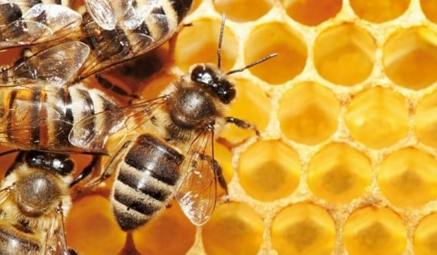Лондонці влаштують фотополювання на бджіл