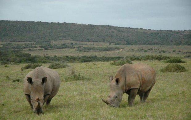 Африканский заповедник стал умнее браконьеров