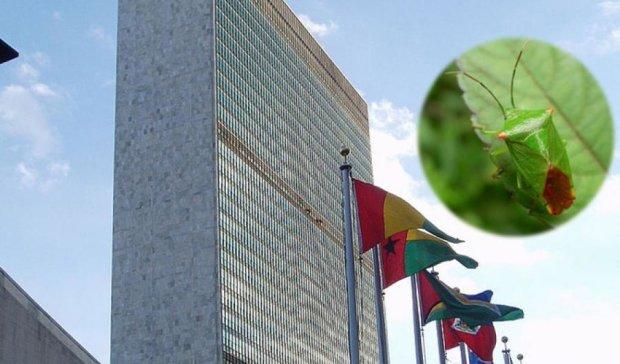 На штаб-квартиру ООН напали клопи