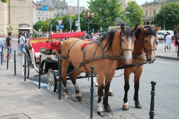 """На улицы Львова вернут конные экипажи, трагедия с ребенком не научила: """"Не путайтесь под копытами"""""""