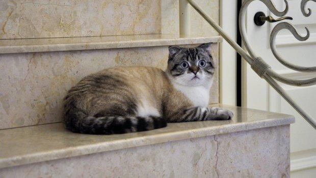 Кот-клептоман начал приносить хозяйке деньги: забавная история со счастливым концом
