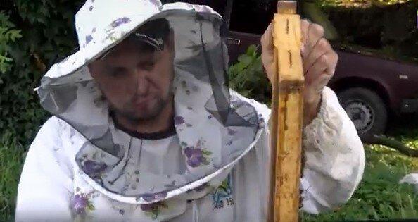 Закарпатські бджолярі завершують сезон збору унікального меду, скріншот з відео