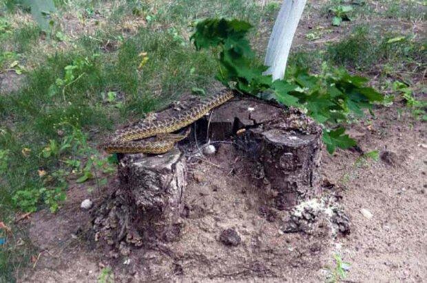 Змія в Дніпрі, фото dp.dsns.gov.ua