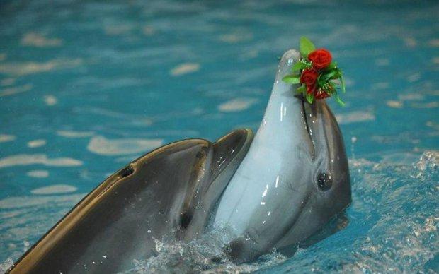 Дельфіни зрівнялися з людиною в романтичності