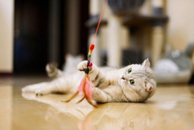 кішка, фото Yahoo