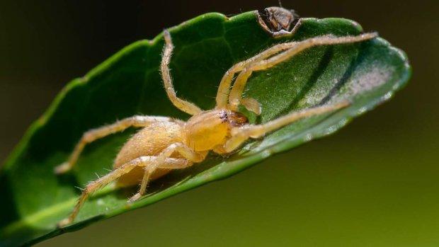 Днепр кишит жуткими пауками: в опасности каждый, что делать при укусе