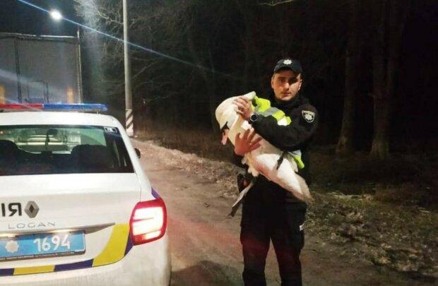 Поліцейські врятували лебедя, фото: Facebook