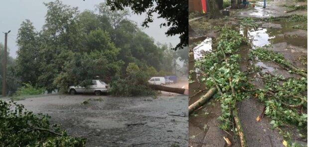 Ураган на Закарпатье повалил деревья