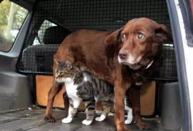 Сліпий собака, фото: img.huffingtonpost.com