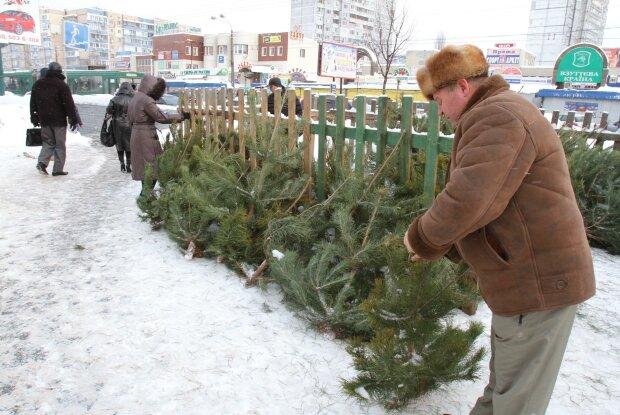 Путин торгует в Крыму елками из Прикарпатья: Новый год на аннексированном полуострове показали одним фото