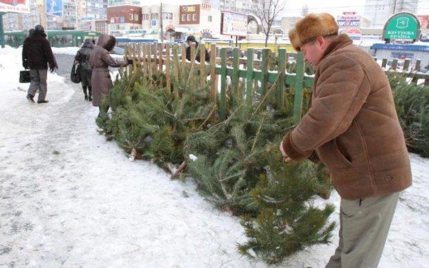 Новое приложение поможет украинцам легально купить елку