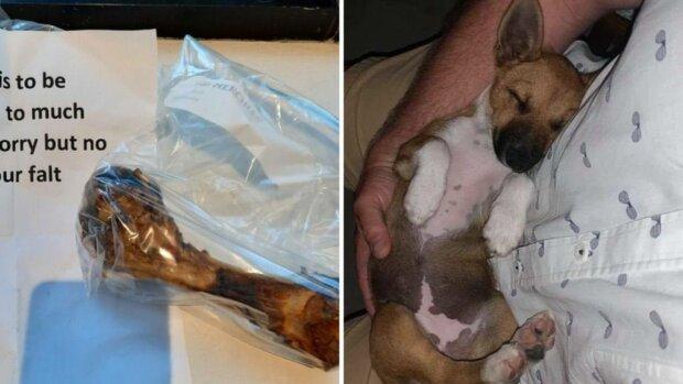 Отруїли собаку, фото: Supplied