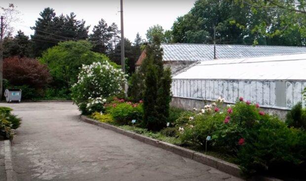 Ботанический сад, скриншот из видео