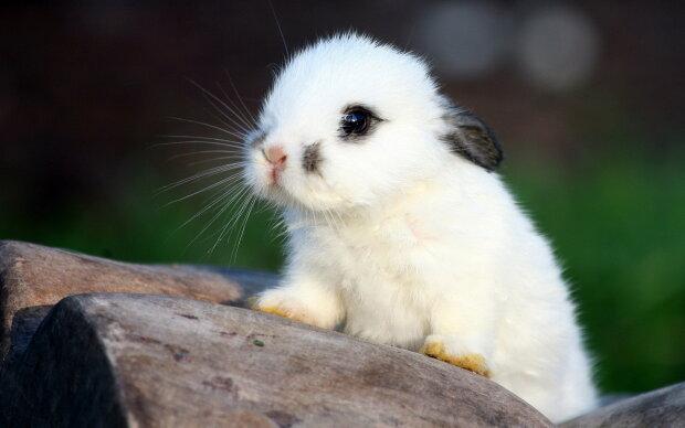 """Веганка з """"добрими намірами"""" вбила сотні кроленят: дика історія шокувала світ"""