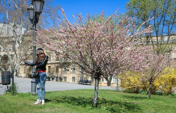 Сакура в Одессе, фото: Odessa.online