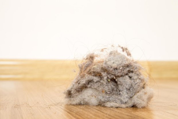 Вчені довели користь вологого прибирання: які небезпеки ховаються в домашнього пилу