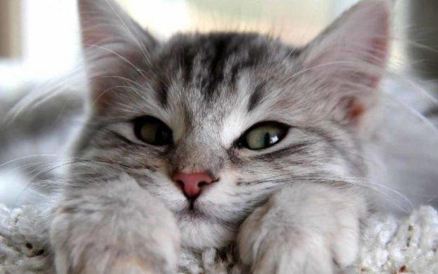 Каждый сможет увидеть мир глазами кошки