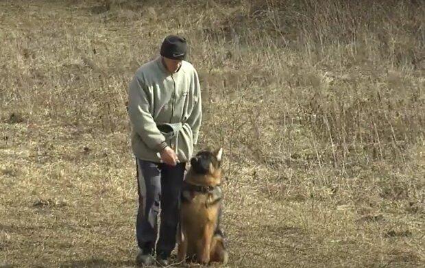 Выгул собак, кадр из видео