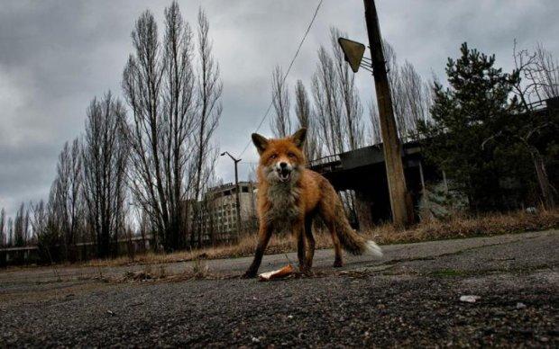 Американці знімуть серіал про Чорнобильську трагедію. Але не в Україні