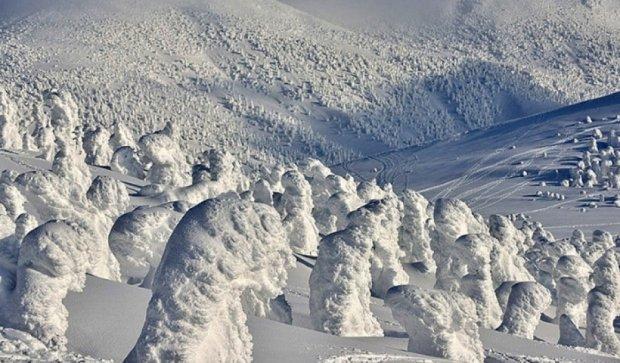 Шедевры зимней природы в Японии (фото)