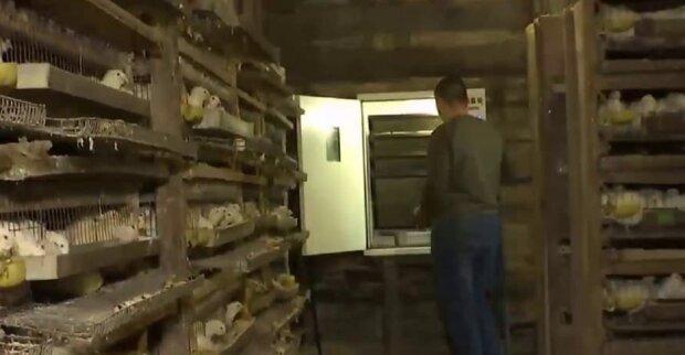 Ветеран АТО откріл бизнес, кадр из репортажа Спецкор на 2+2: YouTube
