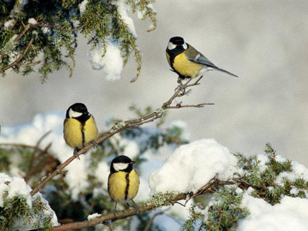 Погода на 28 декабря: где ударят морозы, а где начнется весна