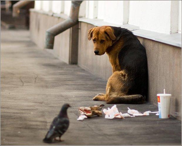В Запорожье собаку выгнали на улицу, так как хозяевам не дали субсидию