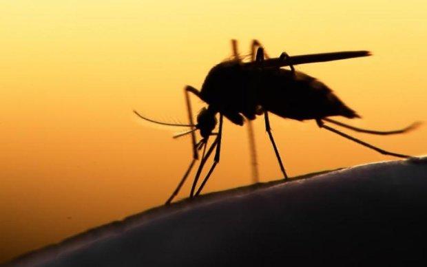 Гігантський комар-монстр налякав вчених: фото