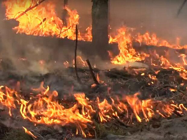 пожежа на Житомирщині, фото з відкритих джерел