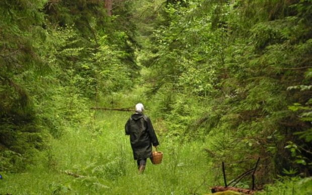 Українська гостинність: на Закарпатті приїжджих грибників били всім селом