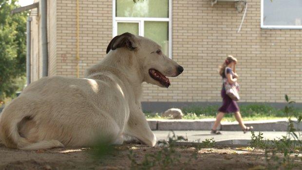 У Львовi жiнку з немовлям пошматувала зграя собак: у Садового сказали зачекати